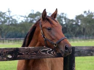 Horse Sample