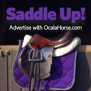 Ocala horses for sale, classified ads