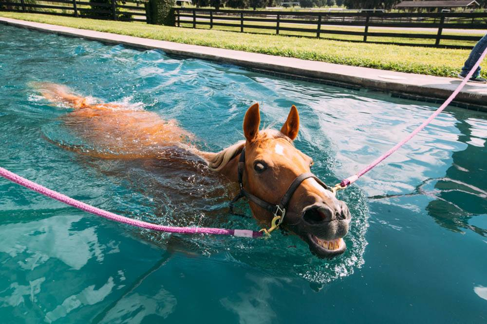 World class Equine Rehab and Conditioning Facilty