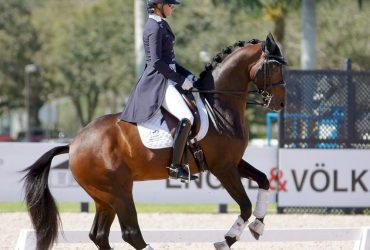 Meet N. Dancer, your Grand Dressage Schoolmaster