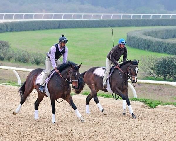 Thoroughbred horse training