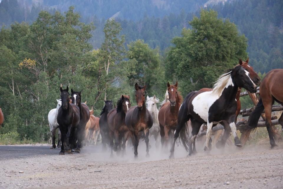 LAST DAY: The Feds are Offering $1000 to People for Adopting Untrained Wild Horses and Burros!