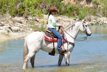 Brave, Kids safe, Family raised Classic grey Quater Horse