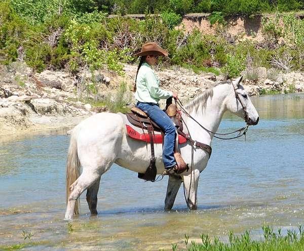 Brave, Kids safe, Family raised Classic grey Quater Horse