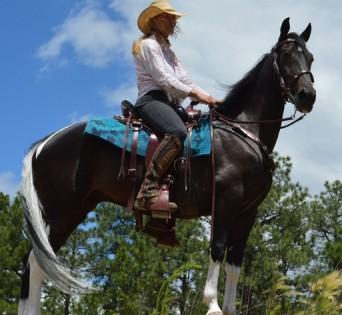 Beautiful Black Tennessee Walking Trail Horse