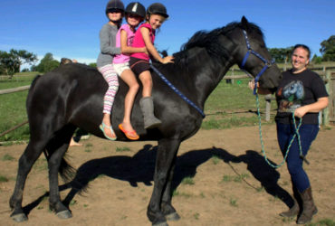 6 year old Friesian gelding